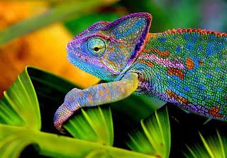 wpchameleon