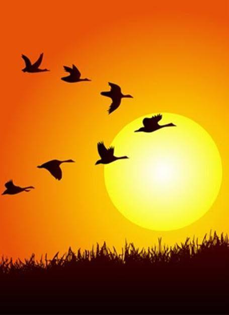 पक्षी V का आकार बनाकर क्यों उड़ते हैं, कलाकारी नहीं इसके पीछे साइंस है साइंस